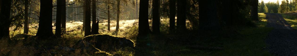 Vikaskogarna fiber